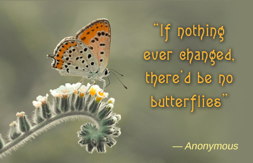Butterfly And Change