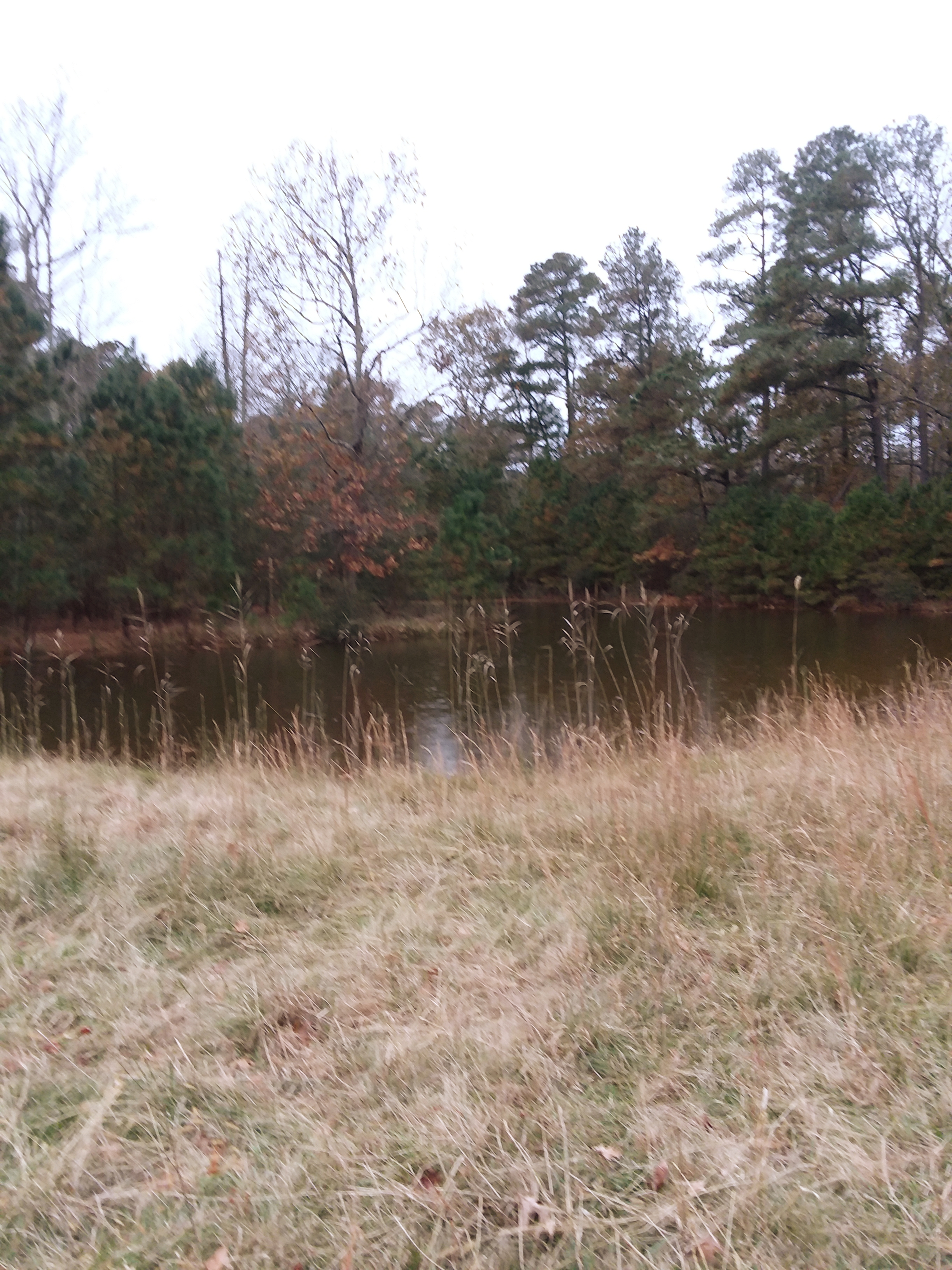POND AT TUBMAN TRAIL