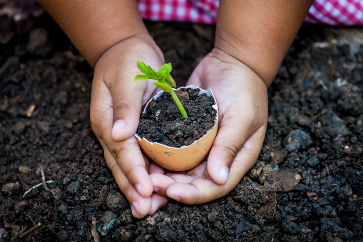 Child Hand Holding Young Tree In Egg Shell Together For Prepare Plant On Ground,save World Concept