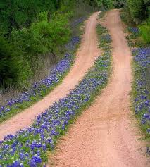 Flower Lined Road